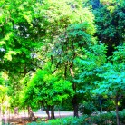 Many Shades of Green In Athens Greece